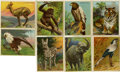 Non-Sport Cards:General, 1909-10 T29 Hassan Animals Collection (64). ...