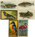 Non-Sport Cards:General, 1910-1912 T42 Bird Series, T43 Bird Series and T58 Fish SeriesCollection (41). ...