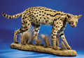 Zoology:Taxidermy, AFRICAN SERVAL CAT FULL-BODY MOUNT. ...