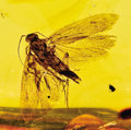 Amber, AMBER-ENTRAPPED FLY. ...