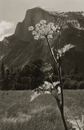 Photography :20th Century , ANSEL EASTON ADAMS (American, 1902-1984). Untitled (Flowering Plant with Mountain Range), 1930s. Silver gelatin, 1930s. ...
