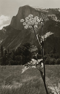 ANSEL EASTON ADAMS (American, 1902-1984) Untitled (Flowering Plant with Mountain Range), 1930s Silve
