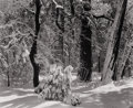 Photography :20th Century , ANSEL EASTON ADAMS (American, 1902-1984). Untitled (Snow-Covered Forest), 1930s . Silver gelatin, 1930s. 7-1/2 x 9-1/4 i...