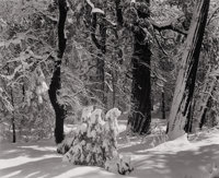 ANSEL EASTON ADAMS (American, 1902-1984) Untitled (Snow-Covered Forest), 1930s Silver gelatin, 1930