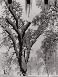 ANSEL EASTON ADAMS (American, 1902-1984) Untitled (Snow-Covered Tree), 1930s Silver gelatin, 1930s