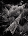 Photography :20th Century , WYNN BULLOCK (American, 1902-1975). Horsetails and Logs, 1957. Silver gelatin, 1957. Paper: 9-7/8 x 7-3/4 inches (25.1 x...