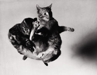 BARBARA MORGAN (American, 1900-1992) Tossed Cats, 1942 Silver gelatin, 1971 10-1/2 x 13-1/2 inche