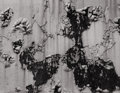 Photography :20th Century , AARON SISKIND (American, 1903-1991). Peeling Paint, 1949. Silver gelatin. Paper: 11 x 14 inches (27.9 x 35.5 cm). Image:...