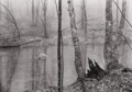 Photography :20th Century , PROPERTY OF A PRIVATE COLLECTION, NEW YORK. PAUL CAPONIGRO (American, b. 1932). Untitled (Landscape), 1968. Silver gel...