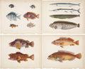Antiques:Posters & Prints, [Commodore Perry]. Collection of Ten Antiquarian Color LithographsFeaturing Various Fish Encountered on Commodore Perry's Exp...(Total: 10 Items)