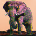 Fine Art - Work on Paper:Print, ANDY WARHOL (American, 1928-1987). African Elephant, 1983.Published in the portfolio Endangered Species. Screenprin...