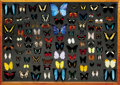 Zoology:Taxidermy, FINE TROPICAL BUTTERFLY DISPLAY CASE. ...
