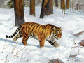 Paintings, PROPERTY FROM THE DUFFY AND TINA OYSTER FOUNDATION. KEN CARLSON (American, b. 1937). Tiger. Oil on canvas. 30 x 40 inc...
