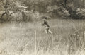 Photography :20th Century , ROBERT FRANK (American, b. 1924). Pablo Walking Through Field, circa 1953. Vintage gelatin silver, 1953. Paper: 8 x 10 i...