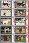 "Non-Sport Cards:Sets, 1950's F67 Hoods Ice Cream ""Dog Cards"" PSA-Graded Complete Set(42). ..."