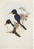 Antiques:Posters & Prints, John Gould. Two Prints: Halcyon Fulgidus. [and:] Halcyon Pyrrhopygia. Two hand-colored lithographs. Both in very good co... (Total: 2 Items)