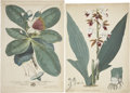 Antiques:Posters & Prints, Three Botanical Prints, including prints by: John Frederick Miller.[and:] James Sowerby. [and:] P. F. Le Gran... (Total: 3 Items)
