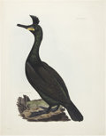 Antiques:Posters & Prints, Prideaux John Selby. Two Prints: Crested Cormorant. [and:] JerFalcon. Two hand-colored prints. Both in excellent co... (Total: 2Items)