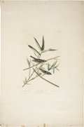 Antiques:Posters & Prints, John James Audubon (1785-1851). Solitary Flycatcher or Vireo -Plate XXVIII (Havell Edition)....