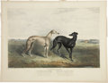 Antiques:Posters & Prints, James Armstrong [publisher]. The Celebrated Greyhounds. Ahand-colored lithograph in very good condition. This print has...