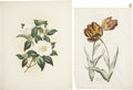 Antiques:Posters & Prints, Four Examples of Botanical Art, including: An Original WatercolorSigned by Shirrell Graves. [and prints by:] Johann M... (Total: 4Items)