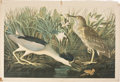 Antiques:Posters & Prints, John James Audubon (1785-1851). Night Heron, or Qua Bird - Plate363 (Bien Edition)....