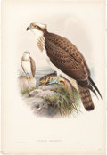 Antiques:Posters & Prints, John Gould (1804-1881). Four Prints: Pandion Haliaëtus. [and:]Neophron Percnopterus. [and:] Milvus Regalis. [and:] ... (Total: 4Items)