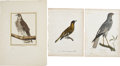 Antiques:Posters & Prints, Three Bird Prints: Le Faucon Sors. [and:] Le Loriot CoudougnanMâle. [and:] L'Acoli. Three bird engravings with hand... (Total: 3Items)