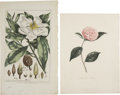 Antiques:Posters & Prints, Five Flower Prints. Five hand-colored engravings. All in very good condition.... (Total: 5 Items)