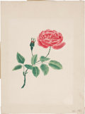 Antiques:Posters & Prints, Unknown Artist. Rose Painting. An original watercolor. In very goodcondition ....
