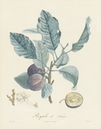 GROUP OF THREE FRENCH BOTANICAL PRINTS