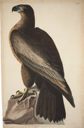 Antiques:Posters & Prints, John James Audubon (1785-1851). Bird of Washington - Plate XI (Havell Edition)....