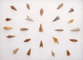 Paleolithic Artifacts:Arrowheads & Paleo Points, FINE COLLECTION OF NEOLITHIC GEM POINTS. ...