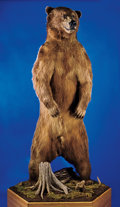 Zoology:Taxidermy, GIANT RUSSIAN BROWN BEAR FULL-BODY MOUNT. ...