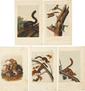 Antiques:Posters & Prints, John James Audubon. Five Squirrel Prints (Octavo Edition). Fivehand-colored lithographs from The Quadrupeds of North Amer...(Total: 5 Items)