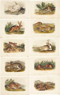 Antiques:Posters & Prints, John James Audubon. Ten Hare Prints (Octavo Edition). Ten hand-colored lithographs from The Quadrupeds of North America.... (Total: 10 Items)