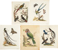Antiques:Posters & Prints, George Edwards. Five Bird Prints. Hand-colored engravings from Edwards' A Natural History of Uncommon Birds and from Wil... (Total: 5 Items)