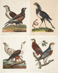 Antiques:Posters & Prints, George Edwards. Four Falcon Prints. Four hand-colored engravings from Wilkes' Encyclopaedia Londinensis. All very good.... (Total: 4 Items)