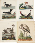 Antiques:Posters & Prints, George Edwards. Four Water Bird Prints. Four hand-coloredengravings from A Natural History of Uncommon Birds, andfrom ... (Total: 4 Items)