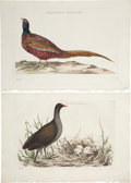 Antiques:Posters & Prints, Cornelius Nozeman. Two Prints: Phasianus, Colchicus, Mas. [and:] Fulica, chloropus. Two hand-colored engravings from N... (Total: 2 Items)