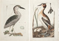 Antiques:Posters & Prints, Cornelius Nozeman. Two Prints: Ardea Nycticorax. [and:] Colymbus,Cristatus. Two hand-colored engravings from Nederlan... (Total:2 Items)