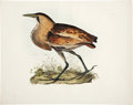 """Antiques:Posters & Prints, Prideaux John Selby. Bittern - Plate VIII. Hand-colored engraving.Watermarked """"J Whatman 1846."""" In excellent condition...."""