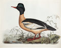 "Antiques:Posters & Prints, Prideaux John Selby. Gooseander, Male - Plate LVII. Hand-coloredengraving. Watermarked ""J Whatman 1846."" In excellent condi..."