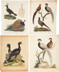 Antiques:Posters & Prints, George Edwards. Four Bird Prints. Four hand-colored engravings from A Natural History of Uncommon Birds and Wilkes' En... (Total: 4 Items)