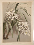 Antiques:Posters & Prints, Frederick Sander. Two Prints: Cymbidium Mastersi. [and:] LæliaEuspatha. Two chromolithographs from Sander's Reichenba...(Total: 2 Items)
