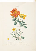 Antiques:Posters & Prints, Pierre Joseph Redouté (1759-1840) and Pancrace Bessa (1772-1835).Five Prints, including: Three Botanical Prints by Re... (Total: 5Items)