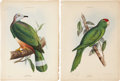Antiques:Posters & Prints, George Robert Gray. Two Bird Prints. Two hand-colored lithographsfrom Genera of Birds Comprising Their Generic Characters...(Total: 2 Items)