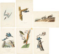 Antiques:Posters & Prints, John James Audubon. Six Bird Prints (Octavo Edition). Sixhand-colored engravings from The Birds of America. All invery... (Total: 6 Items)