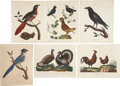 Antiques:Posters & Prints, George Edwards. Six Bird Prints. Six hand-colored engravings fromJohn Wilkes' Encyclopaedia Londinensis. All very good....(Total: 6 Items)