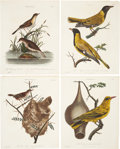 Antiques:Posters & Prints, George Edwards. Four Bird Prints. Four hand-colored engravings fromJohn Wilkes' Encyclopaedia Londinensis. All very goo...(Total: 4 Items)
